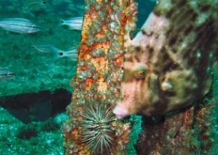 Искусственные рифы привлекают туристов на курорты Флориды